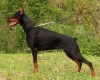 vanille1234 - éleveur canin Dogzer