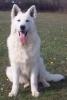 shanouxx - éleveur canin Dogzer