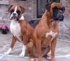 Math39 - éleveur canin Dogzer
