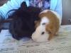 galop27800 - éleveur canin Dogzer