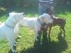ilea08 - éleveur canin Dogzer