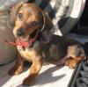 iomega - éleveur canin Dogzer