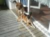 LN_ChucKie - éleveur canin Dogzer