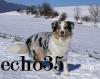 echo35 - éleveur canin Dogzer
