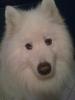 lysa2104 - éleveur canin Dogzer