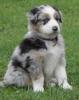 agadice - éleveur canin Dogzer