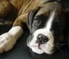 melangel78 - éleveur canin Dogzer