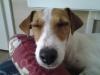 isaisal51 - éleveur canin Dogzer