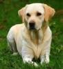 marronnier - éleveur canin Dogzer