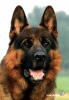 tigresse44 - éleveur canin Dogzer
