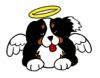 Loo-Dog - éleveur canin Dogzer