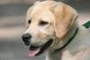 5Leeloo5 - éleveur canin Dogzer