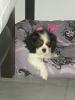 Gaufrette2 - éleveur canin Dogzer