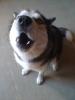 Letty111 - éleveur canin Dogzer