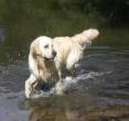 bombedu - éleveur canin Dogzer