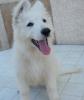 falia29260 - éleveur canin Dogzer