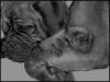 coyot3-girl - éleveur canin Dogzer