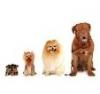 weskase - éleveur canin Dogzer