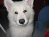 abb25 - éleveur canin Dogzer