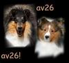 av26 - éleveur canin Dogzer