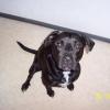 starky971 - éleveur canin Dogzer