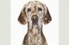 abis321 - éleveur canin Dogzer