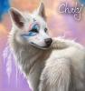 Chakalia - éleveur canin Dogzer