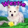 Jennyfer10 - éleveur canin Dogzer