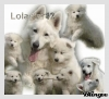 lolastar12 - éleveur canin Dogzer