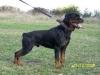 marc_92 - éleveur canin Dogzer