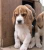 Maley2001 - éleveur canin Dogzer