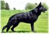 yoyo-17 - éleveur canin Dogzer