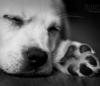 manue0707 - éleveur canin Dogzer