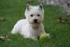 margaux122 - éleveur canin Dogzer