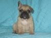 miss_71 - éleveur canin Dogzer