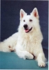 basile52 - éleveur canin Dogzer