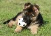 sabrina68 - éleveur canin Dogzer