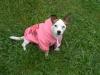 06mathilde02 - éleveur canin Dogzer