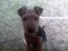 dian080198 - éleveur canin Dogzer