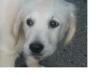 momo2504 - éleveur canin Dogzer