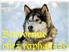 raph43370 - éleveur canin Dogzer