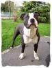 Ylona68 - éleveur canin Dogzer