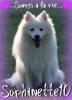Sophinette10 - éleveur canin Dogzer