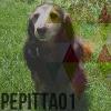 pepitta01 - éleveur canin Dogzer