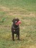 jessica03300 - éleveur canin Dogzer