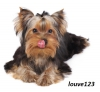 louve123 - éleveur canin Dogzer