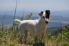 steph002 - éleveur canin Dogzer