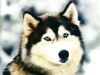 betty98 - éleveur canin Dogzer