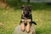Princess.Melissa - éleveur canin Dogzer