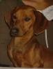 mioumiou2 - éleveur canin Dogzer